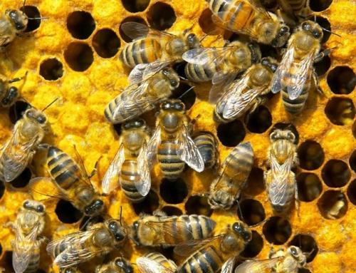 The brilliant bee